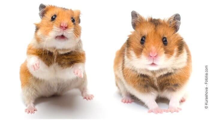 Hamsterfreunde aufgepasst... im Tomodachi Haustiershop fndet Ihr alles Leckere für Euren Hamster.