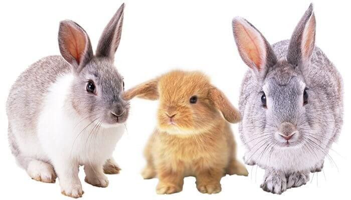 Tomodachi Kaninchenfutter und Natursnacks für große und kleine Hasen