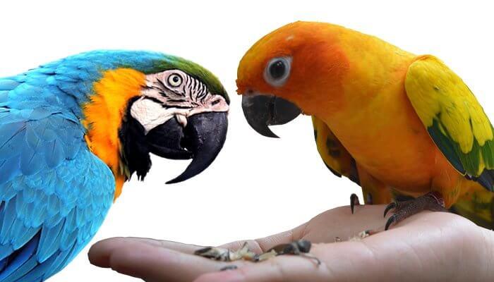 Gesundes, natürliches Papageienfutter und Sittichfutter - Naturprodukte von Tomodachi
