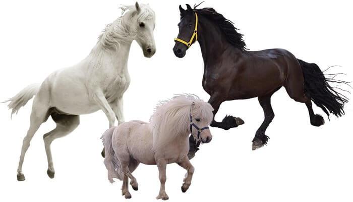 Beste Pferdeprodukte für Fitness und Gesundheit unserer Pferde von Tomodachi