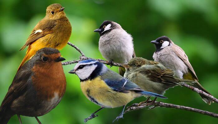Tomodachi Naturfutter für unsere heimischen Singvögel und nistende Wildvögel findet Ihr im Tomodachi Wildvogelshop.