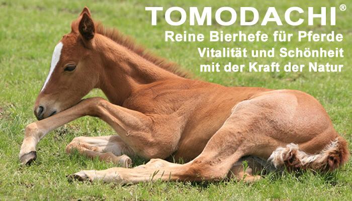Bierhefe Pur für Pferde - Naturprodukt von Tomodachi, 100% Bierhefe ohne Biertreber Futterzusatz für das Pferd